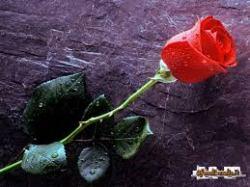 11052015: Un fiore