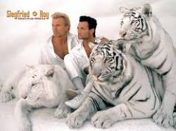 13022017: Sigfried e Roy e la tigre bianca