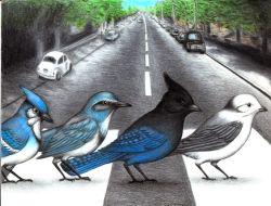 13092017: Abbey Road Piccioni