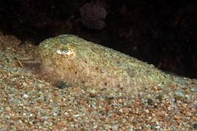 Mar Menuda, Tossa de Mar. 5m. 16ºC.