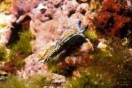 Mar Menuda, Tossa de Mar. 20m. 15ºC.