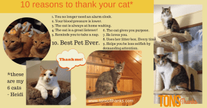 10 reasons to thank your cat on National Cat Day or any day!
