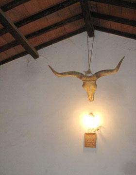 Maremmana cow horns