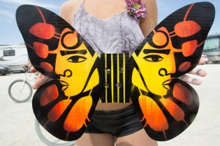 Butterfly Wings - 2014