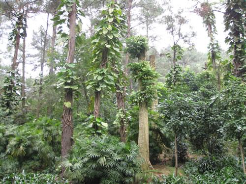 Qingxiushan Park Foliage