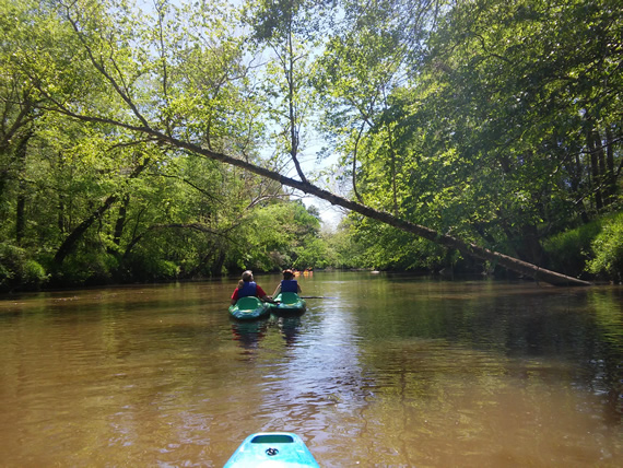 Tar River kayaking