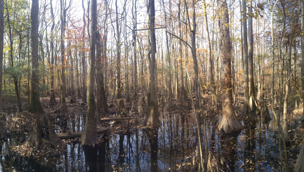 Congaree National Park swamp