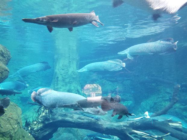 Chimelong freshwater tank