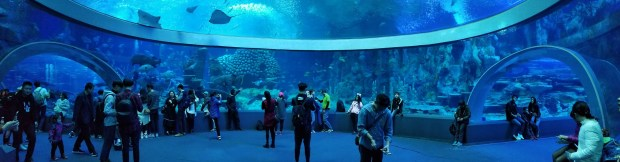 Chimelong oceanarium tunnel pano