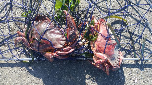 local crabbing