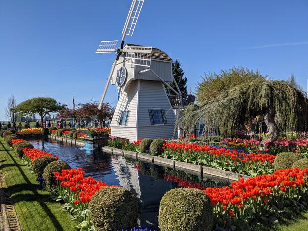 Tulip Town windmill