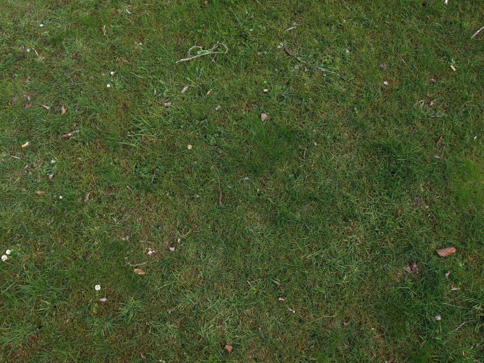 Kostenlose Gras Rasen und Blumen Textur Foto Sammlung