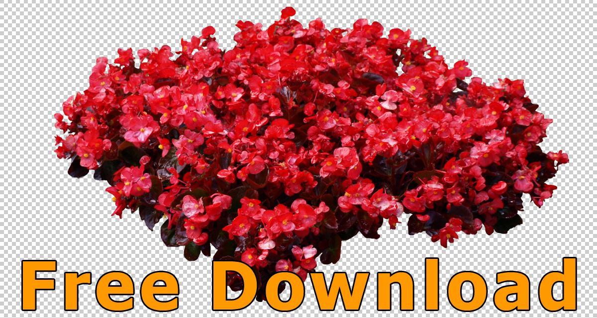 Freigestellte Blumen PNG  Kostenloser Download