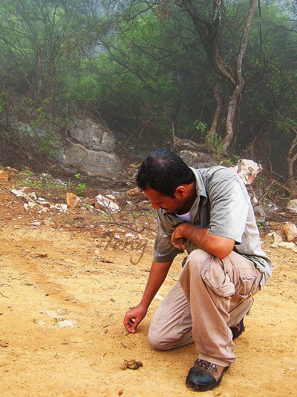 Hadi checking scat