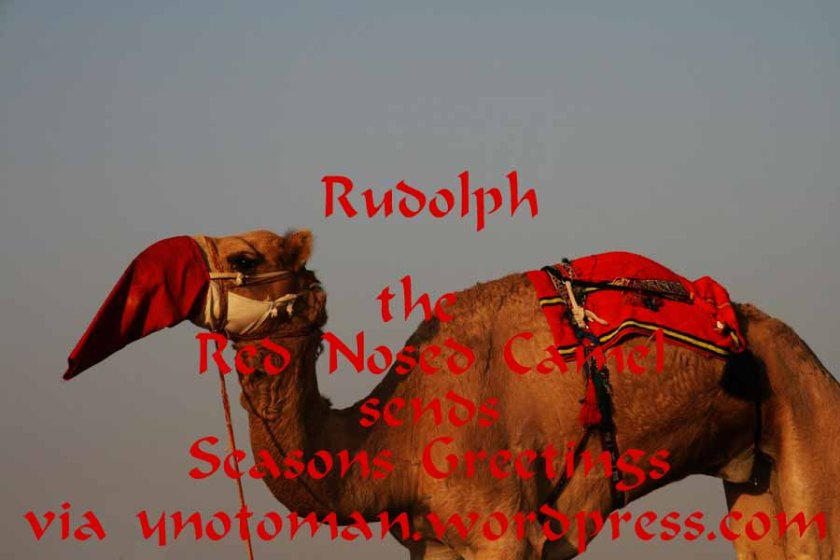 Rudolph the Red Nosed Camel in Oman