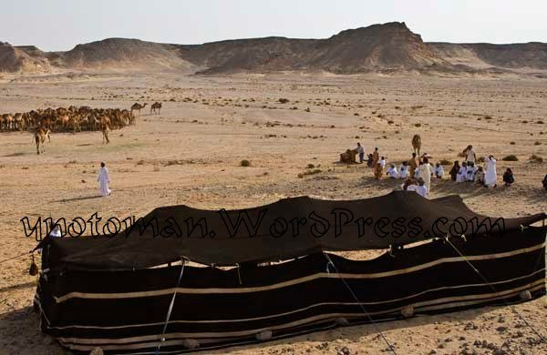 Tent and Camels waiting for Kate Humble