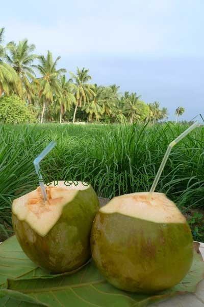 Salalah CocoNuts