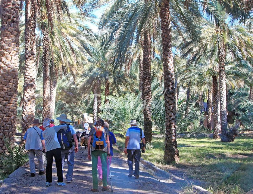 Date Oasis on a Tour in Oman over Christmas