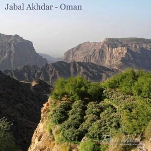 Jabal Akhdar Oman (2)