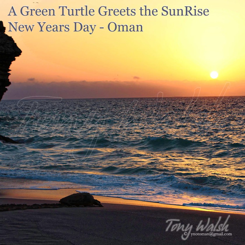Green Turtle Oman at SunRise