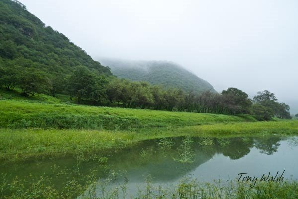 Salalah in Summer