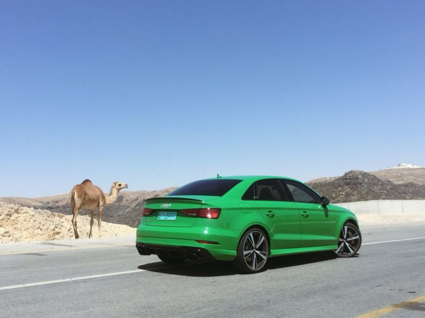Audi on Road with Camel in Dhofar