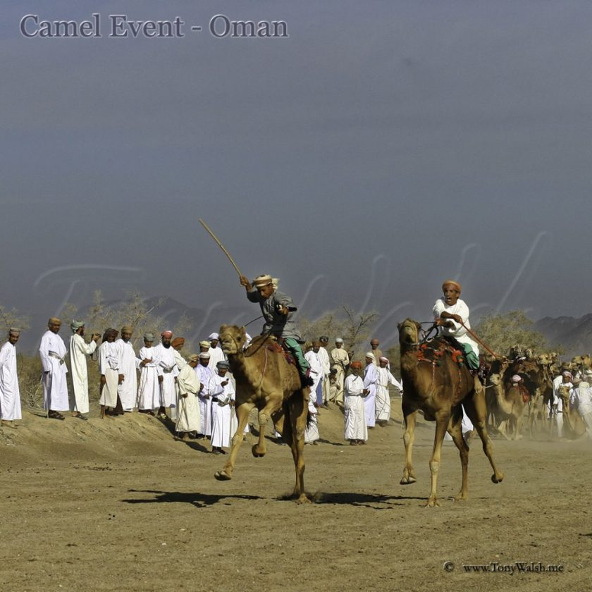 Camel event Oman Oman's Top 5 things to do in April