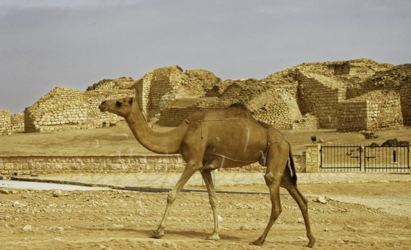 Samharam with Camel visitor