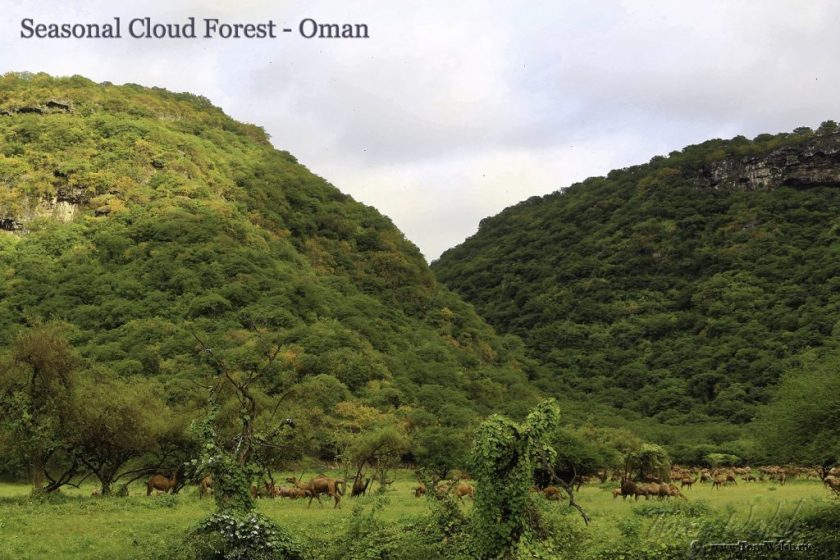 Seasonal Cloud Forest - Oman