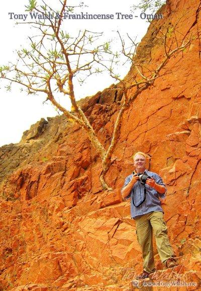 Tony Walsh Oman author and Frankincense Tree Oman Zegrahm
