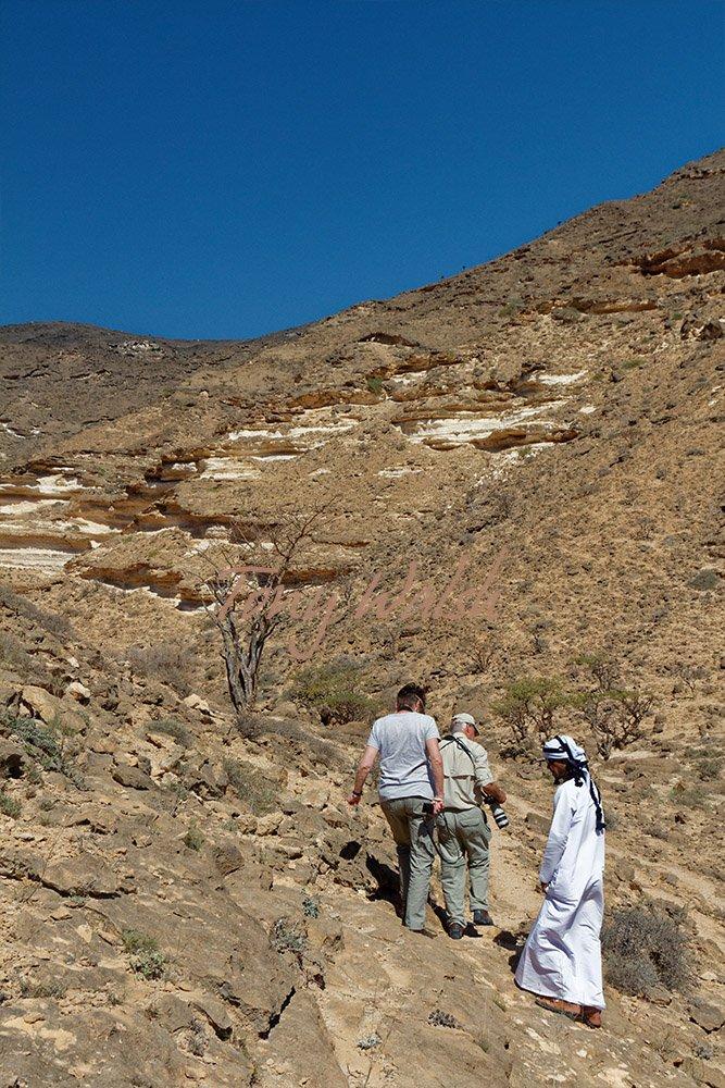 Walking in Dhofar mountains near Frankincense in Dhofar trees