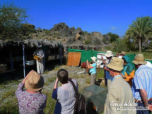 Learning about Beekeeping Oman