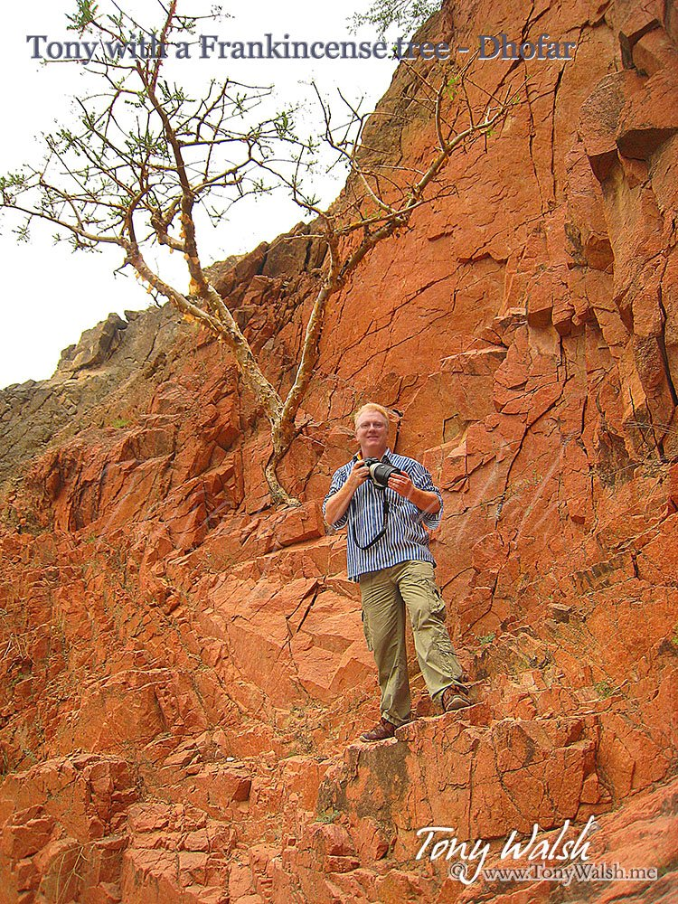 Tony Walsh by a Frankincense tree Dhofar Oman