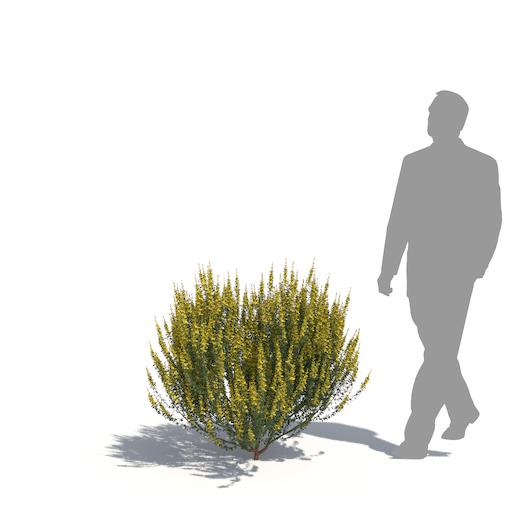 Kit di piante Laubwerk