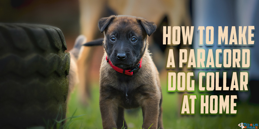 How to Make a Paracord Dog Collar at Home