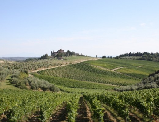 Wine's trail in Tuscany