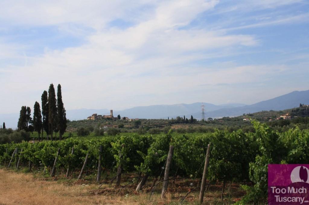 Vineyards near Florence