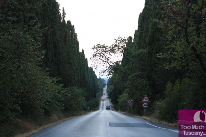 The avenue to Bolgheri