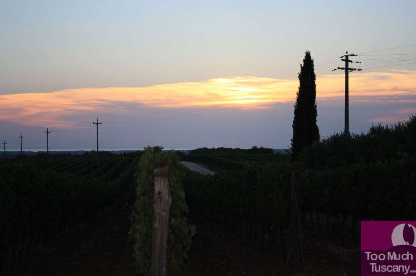 Sunset in Bolgheri