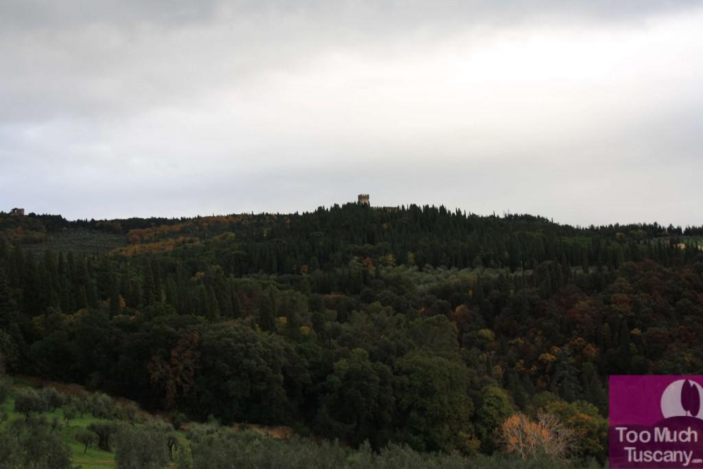 The estate