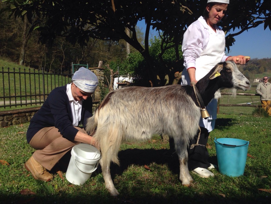 Ada & Sandra milking Campanina