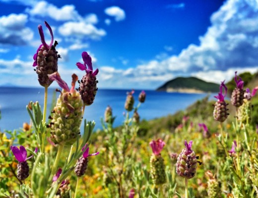 Wild lavender - Via dei Rosmarini
