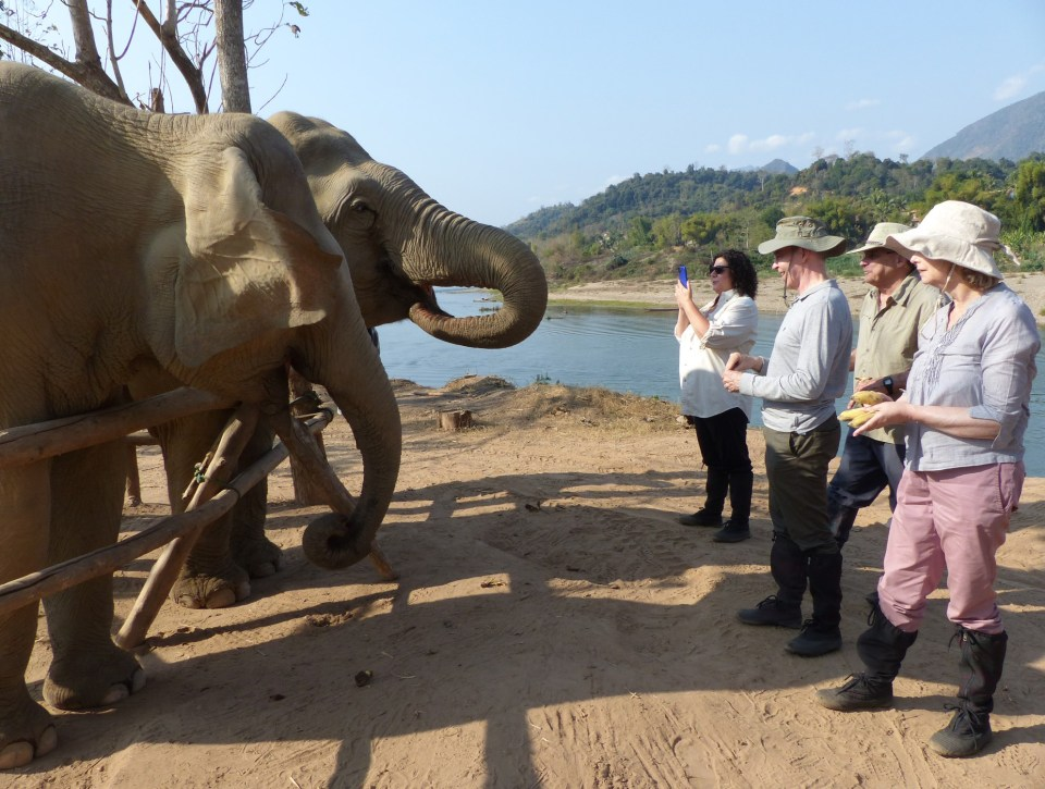 Elephants being fed by four people