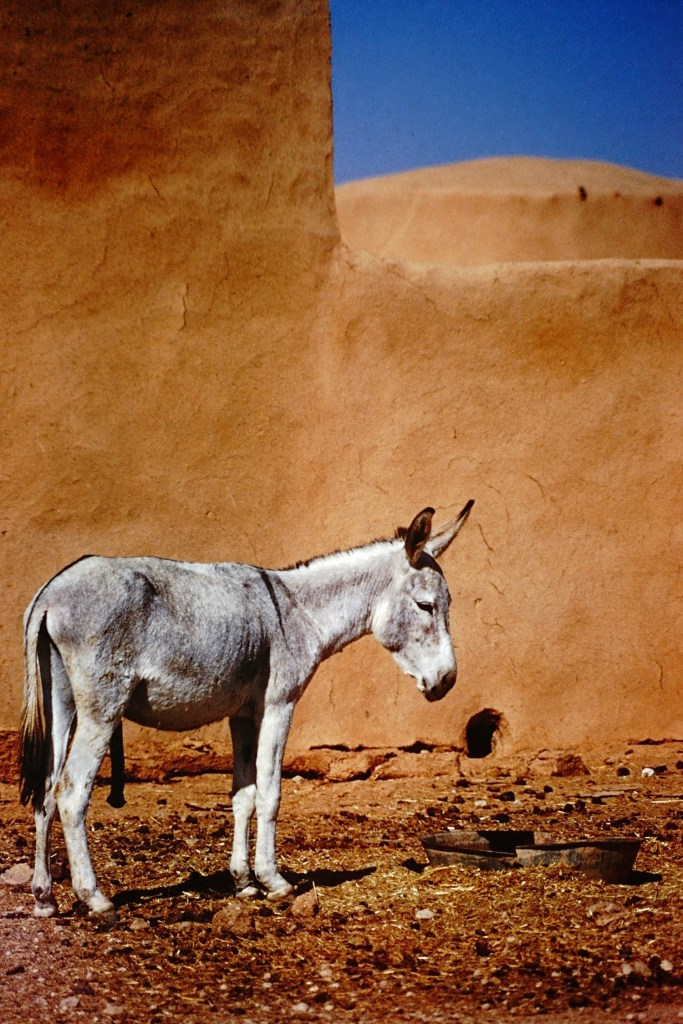 Donkey standing by a wall
