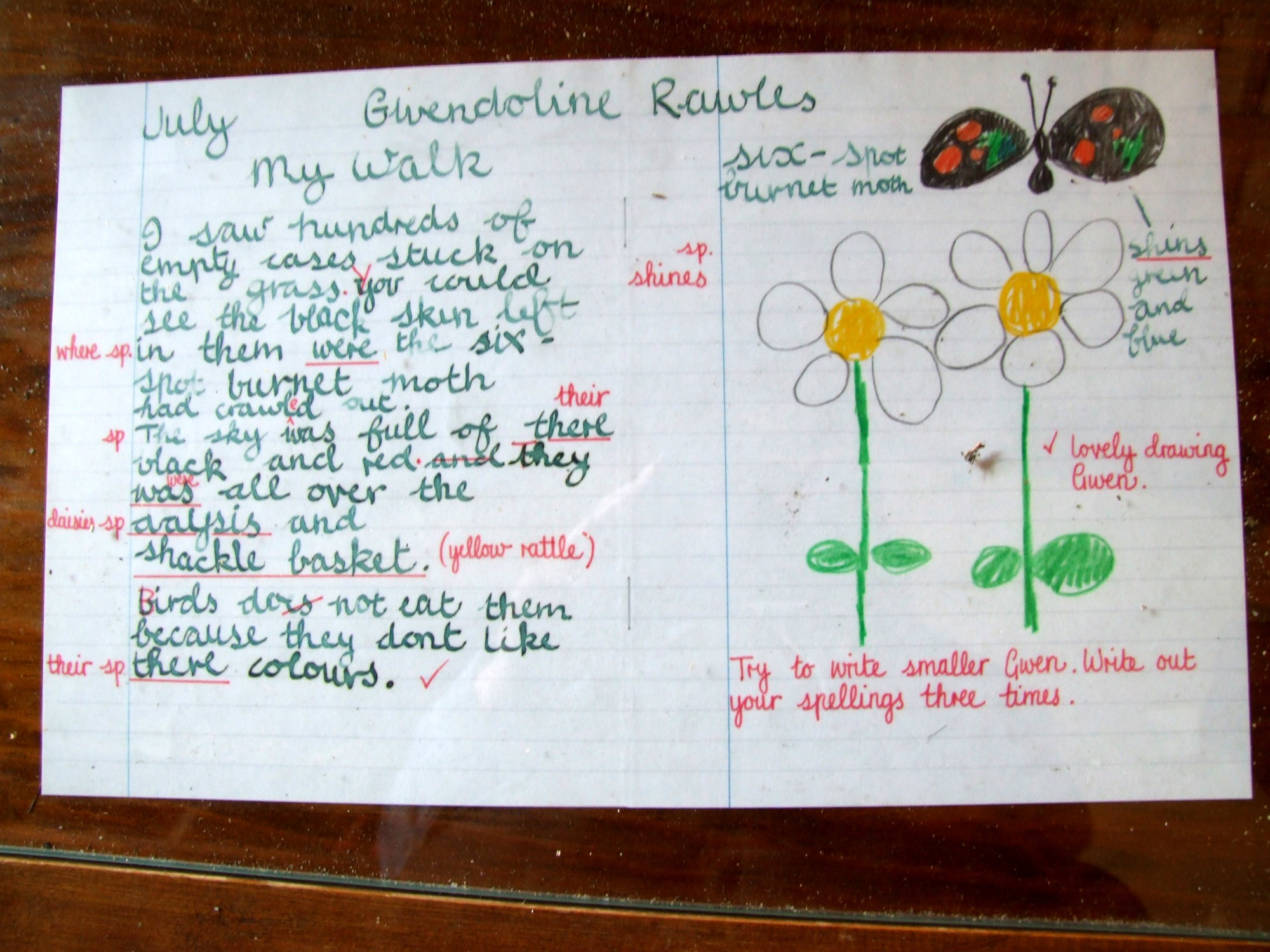 Child's nature notes