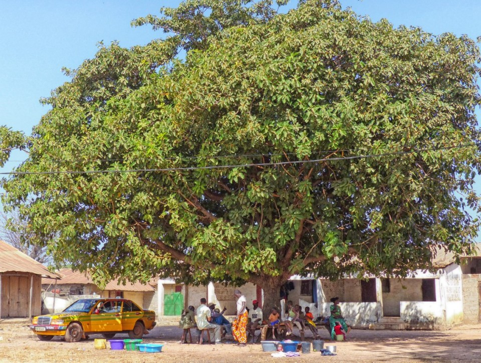 People gathered under a large tree