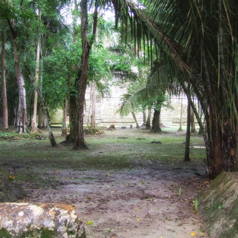 Mayan ruins surrounded by trees