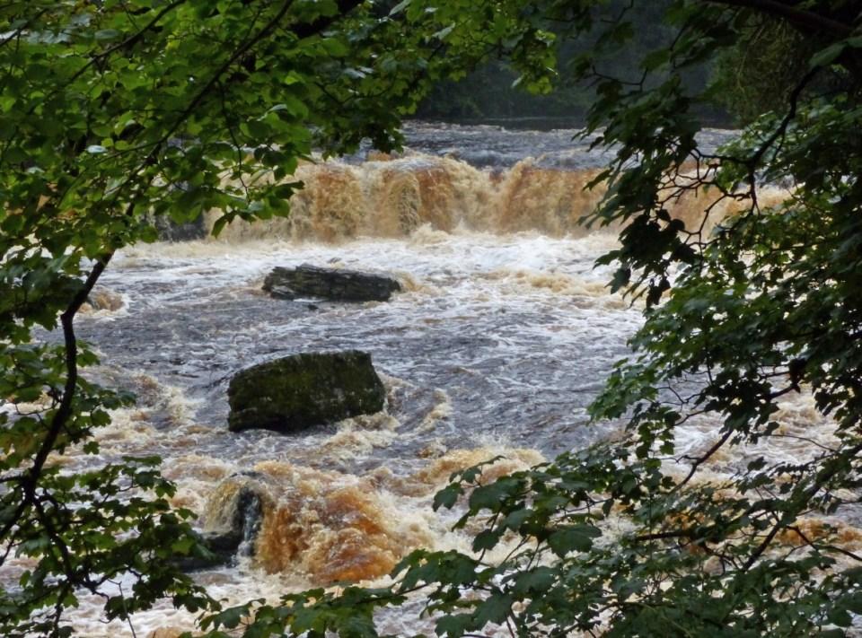 Cascading waterfall seen through trees