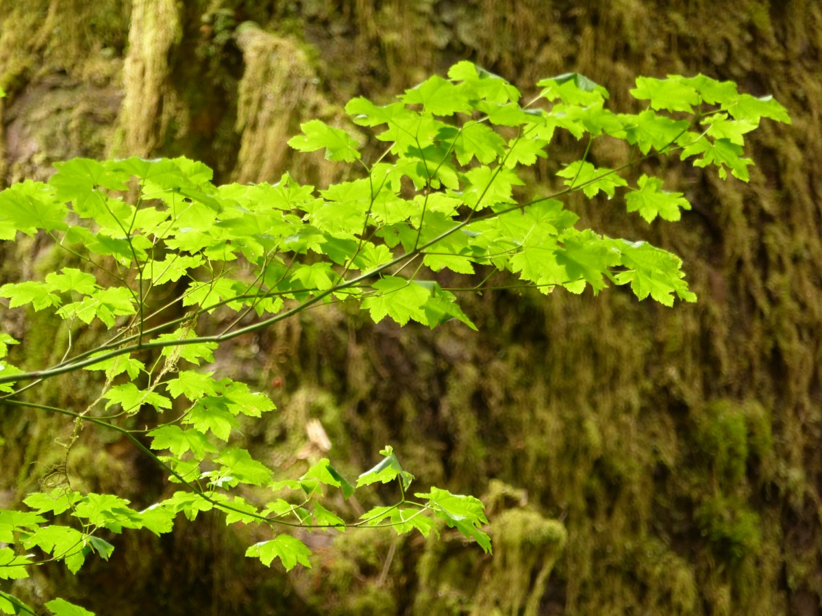 Vivid green leaves