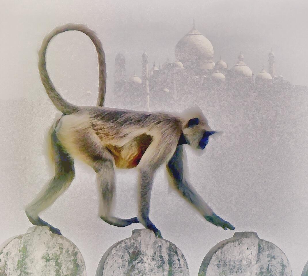 Manipulated photo of monkey and Taj Mahal